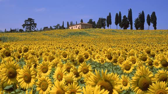 Καλοκαίρι στην Τοσκάνη, Ιταλία