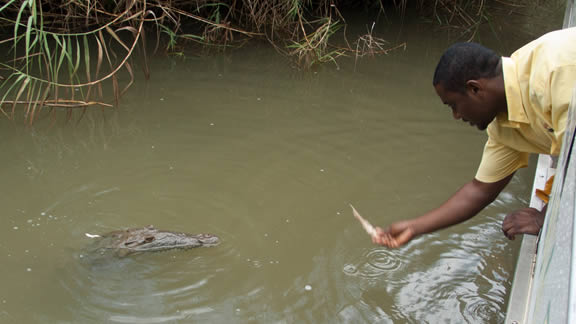 Black River, Τζαμάικα
